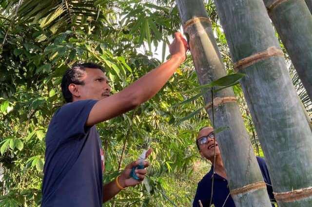 New way to use bamboo to produce liquor