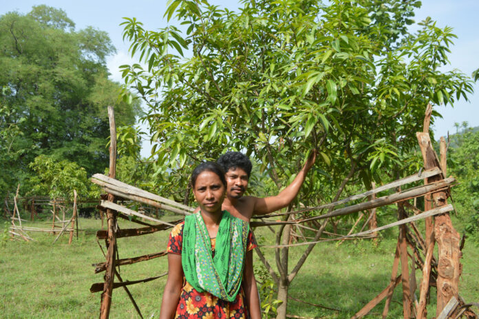 SUSTAINABILITY OF HORTICULTURE CULTIVATION P