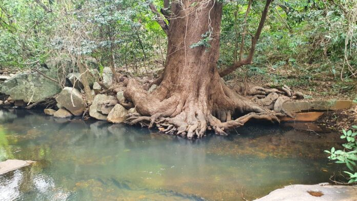 Green oasis in Seshachalam hills