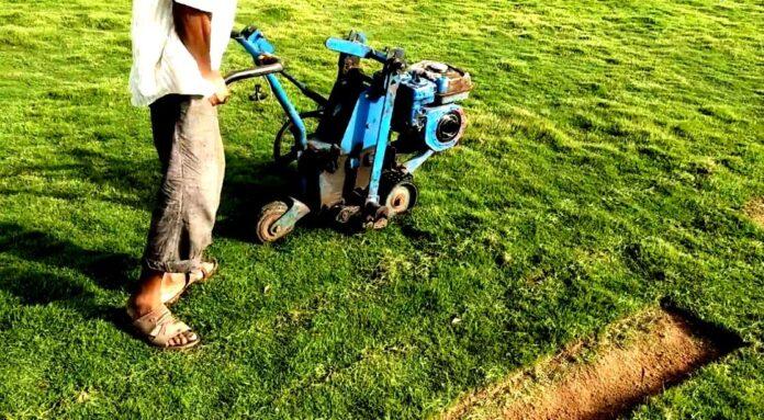 How To Grow Carpet Grass